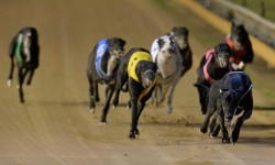 Bendigo meeting tranferred – 10 February, 2017