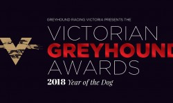 Top dogs to be gonged at Victorian Greyhound Awards