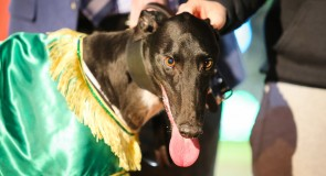 Hinkley greyhound to take on Australia's best at half-time of Friday night footy