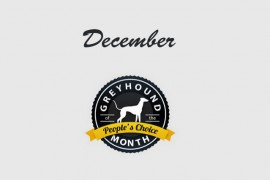 Greyhound of the Month Voting Now Open!