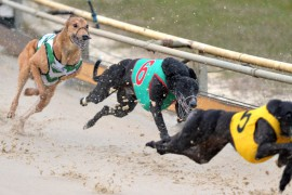 North-East Wrap: Triple Dead Heat…Almost!