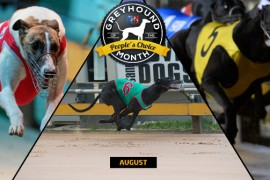 VOTE for August's RSN Greyhound of the Month