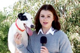 Video: Introducing Some of our 'Available' Greyhounds