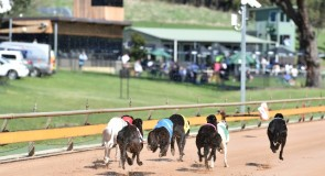 RICH MAIDEN: Vic Bred Final among highlights at Healesville