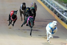 Victorian greyhound racing set for an exciting season