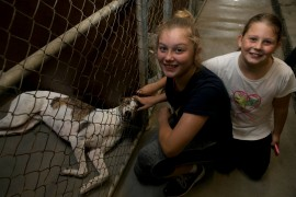 Record number of greyhounds adopted at GAP Seymour weekend