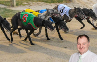 More races means more opportunities for our greyhounds