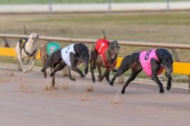 Delbridge counting on Ballarat dozen