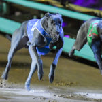 Tommy Shelby (4) and Fernando Bluey (6) give their all in the charge to the finish line.
