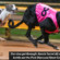 Greyhound gems secure remaining spots in Pink Diamond Finals