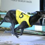 Handsome Rhino takes out heat 1 in 29.85sec for Paul Galea.